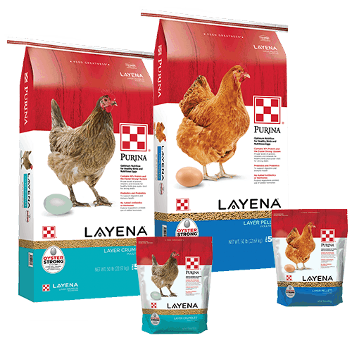 Products_Flock_Purina-Layena-Layer-Crumbles-50-10-Combo_1 copy
